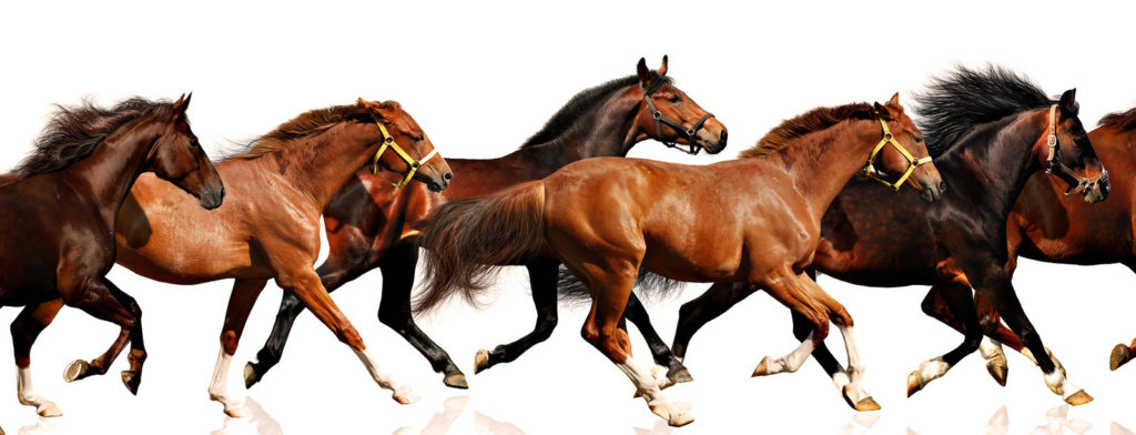 stado-koni-biegnie-zwierzeta-spoleczne-dominacja
