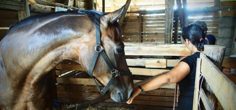 Praca z koniem z ziem z boskie strach
