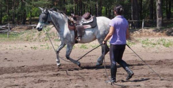Praca z koniem z ziemi galop w siodle