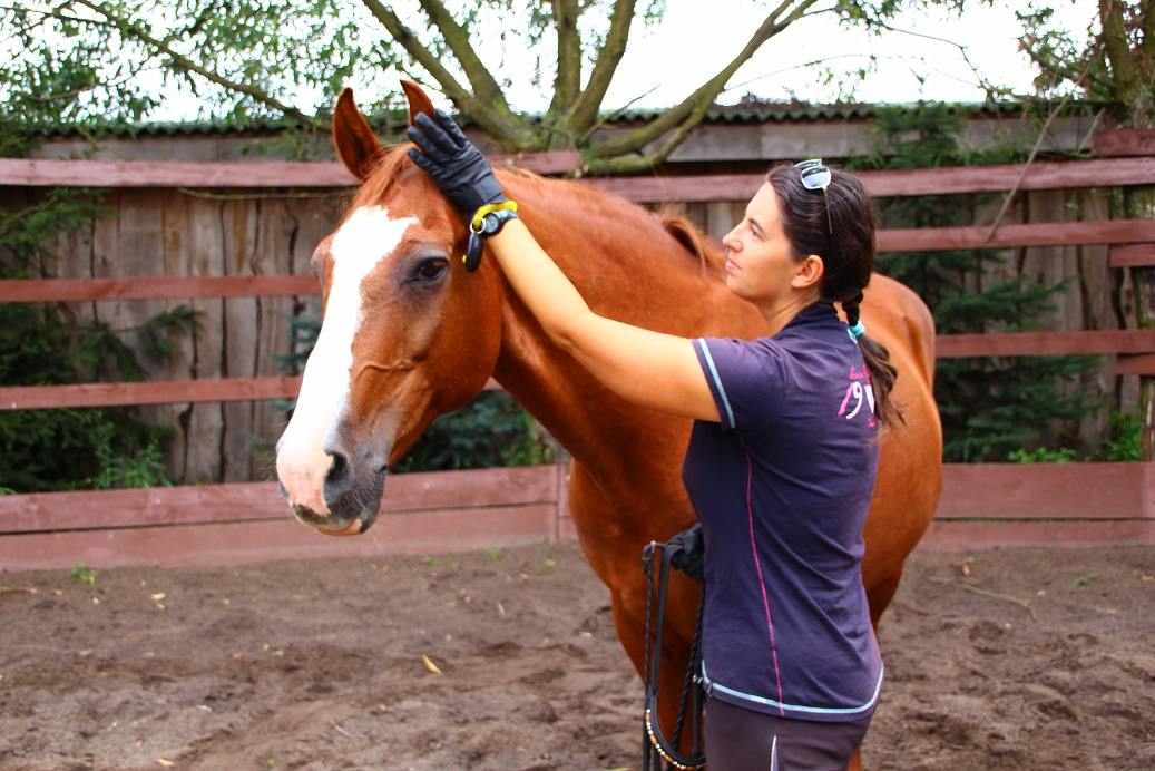 Trening koni jaki charakter ma twó koń głaskanie po uchu