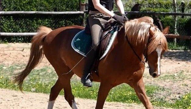 Trening koni Panikarz jazda ujeżdżeniowa