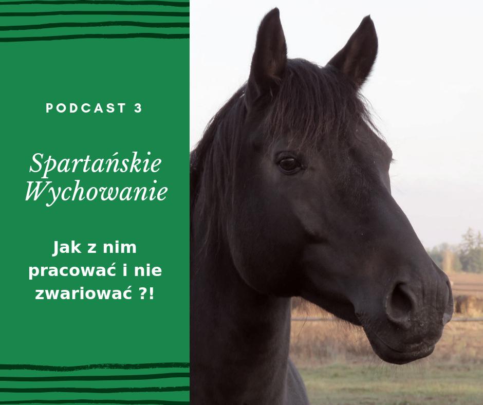 Spartańskie Wychowanie Trening koni2.png