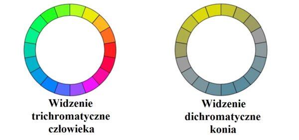 Percepcja otoczenia Widzenie kolorów w treningu koni