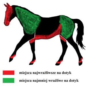 Percepcja otoczenia Wrażliwość na dotyk w treningu koni