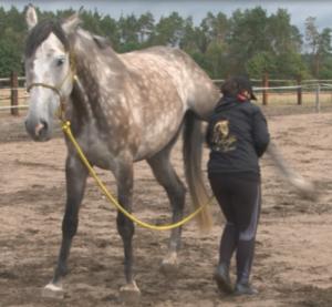 Kopanie w treningu koni