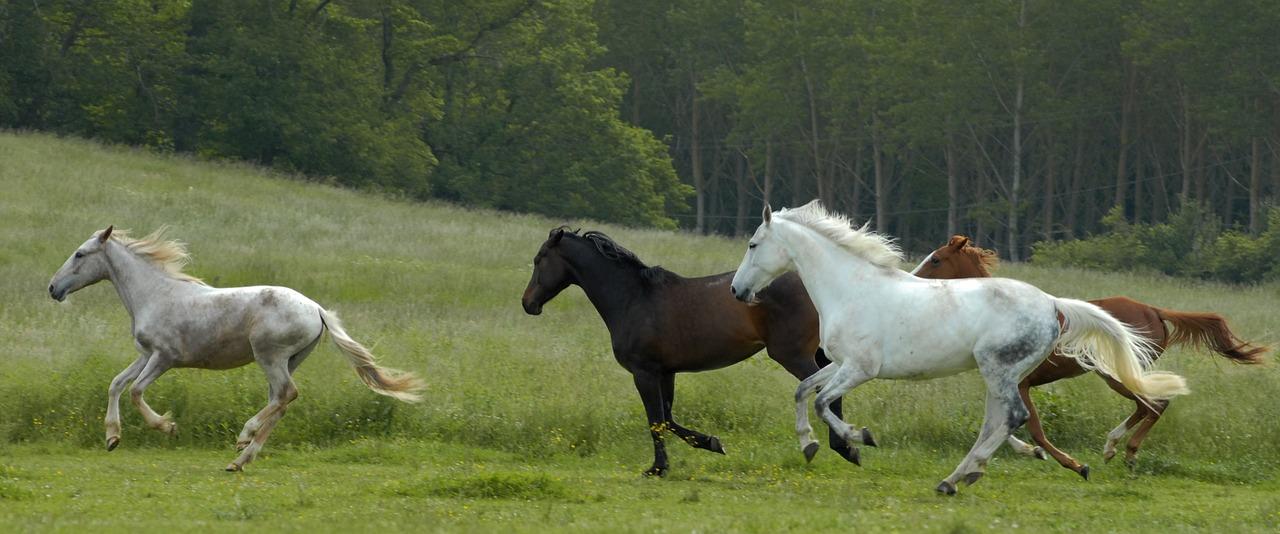 biegnące konie