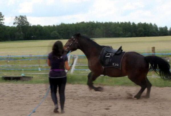 emocje_trening_konia_galop_ucieczka