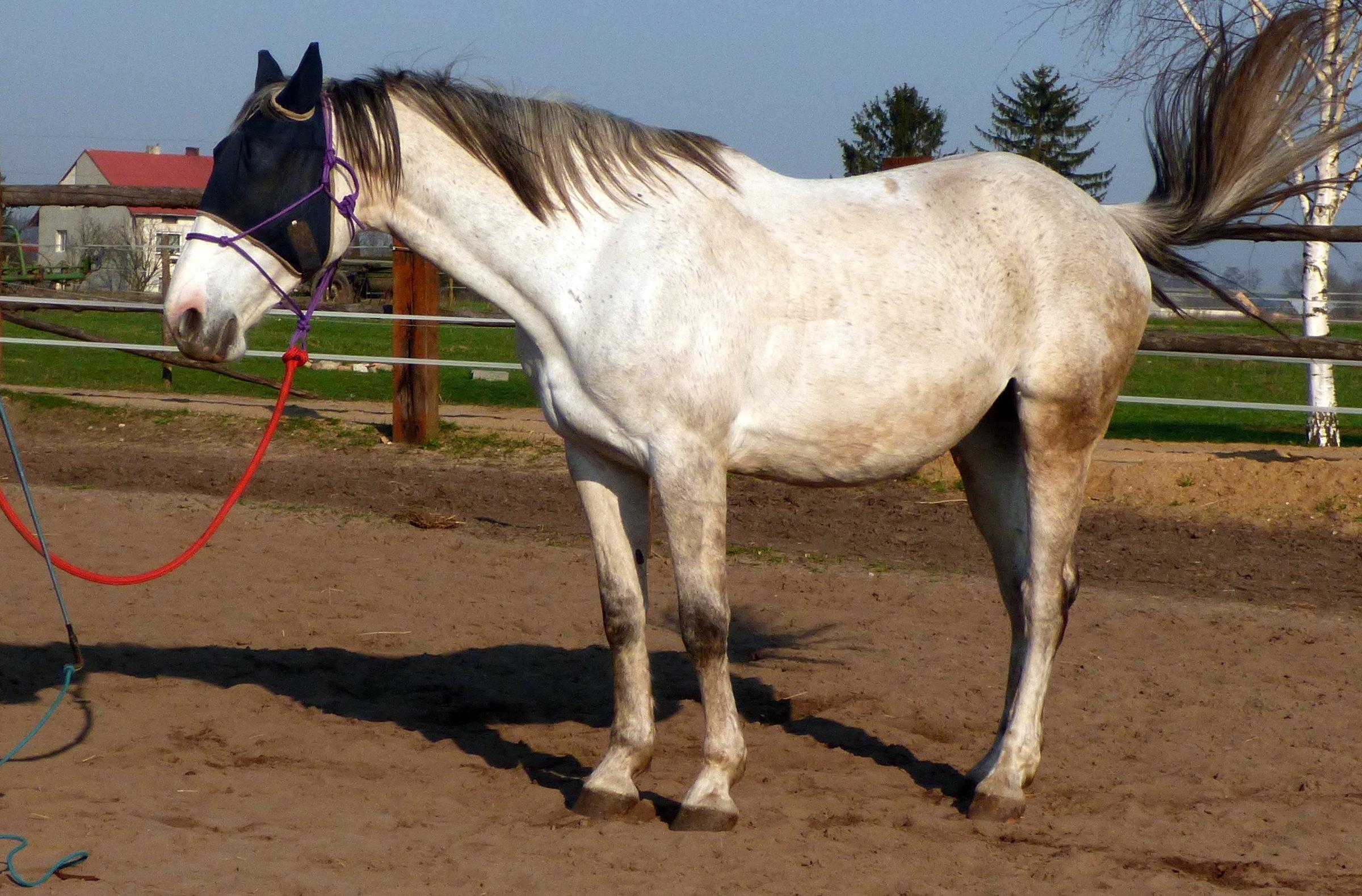 cofanie_lina_ustawienie_konie