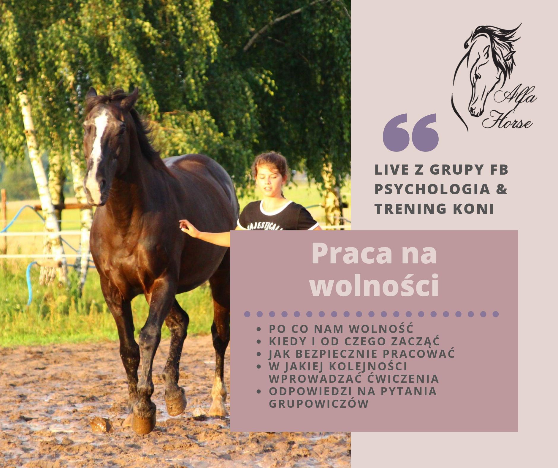 trening_koni_na_wolnosci_live