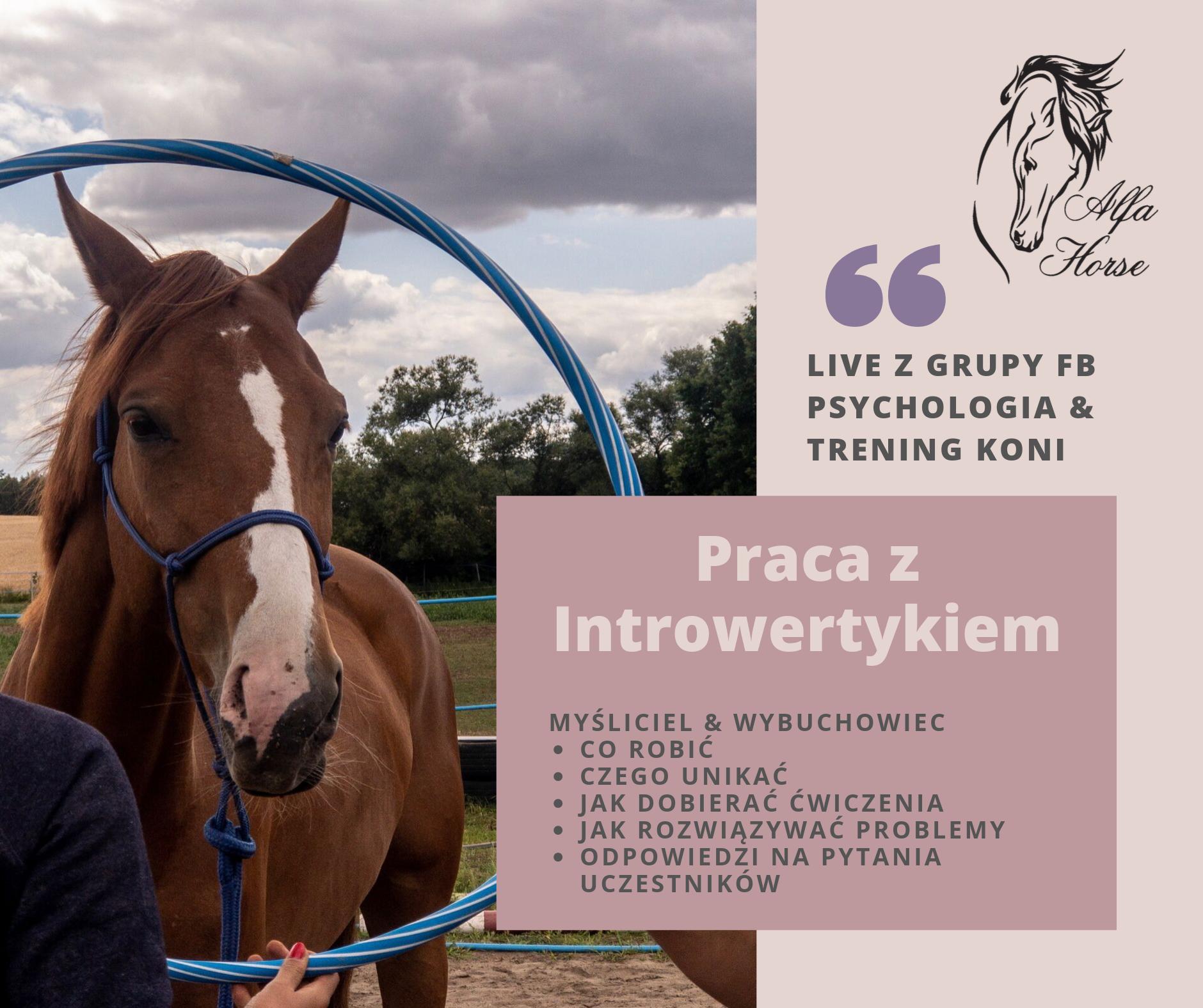 trening_konia_introwertyk