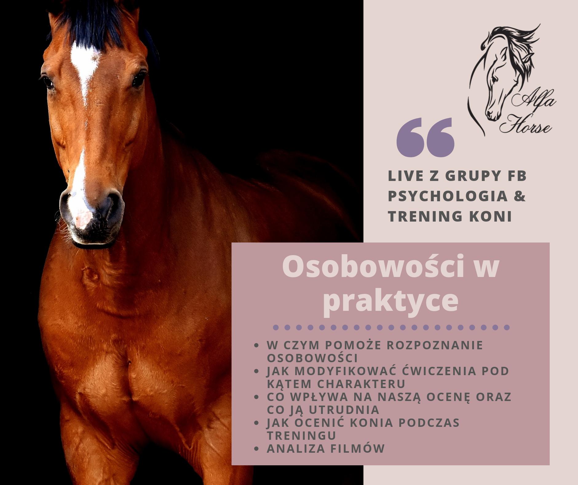 osobowosc_praktyka_trening_koni