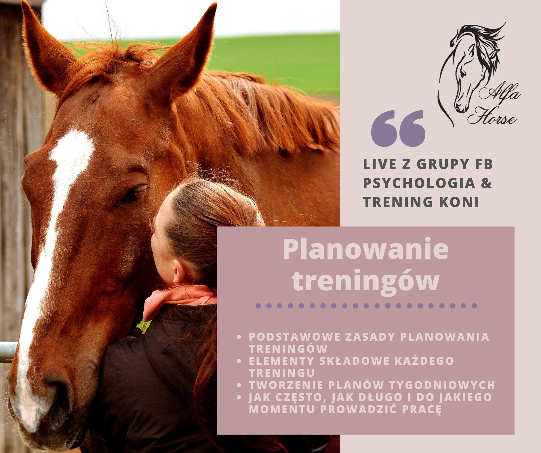 live_7_planowanie_treningu_koni