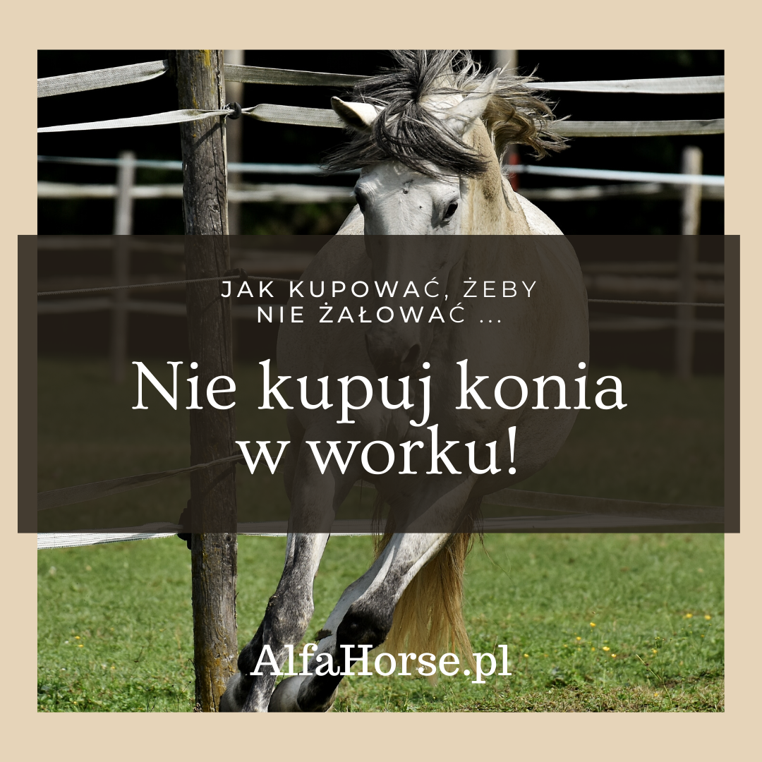 kupno_konia_jak