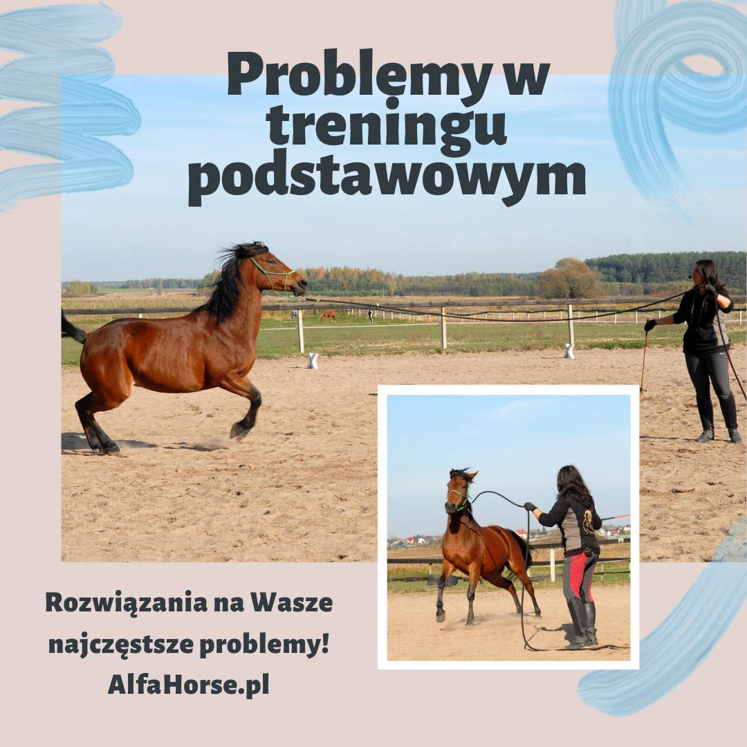 problemy_trening_koni_podstawowy