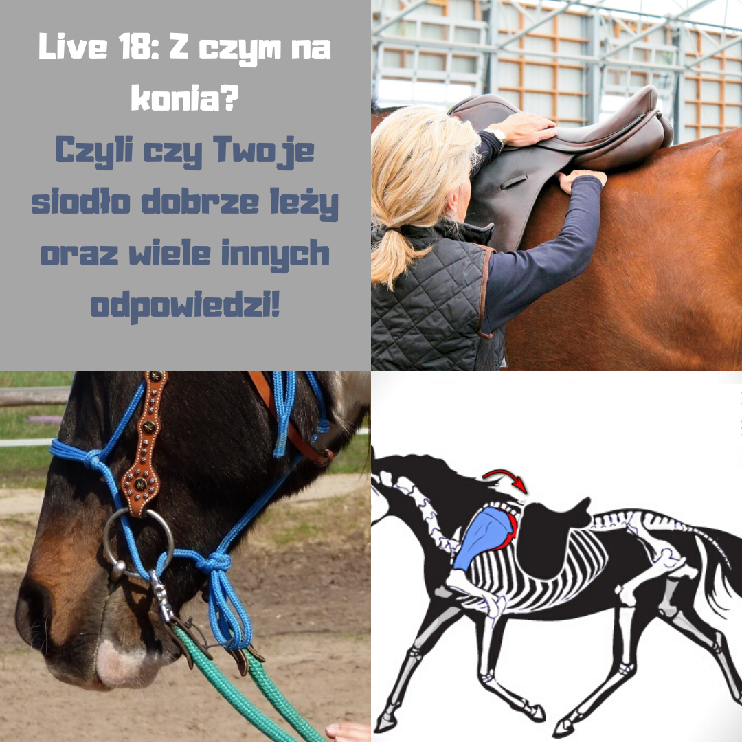 dopasowanie_siodla_trening_koni
