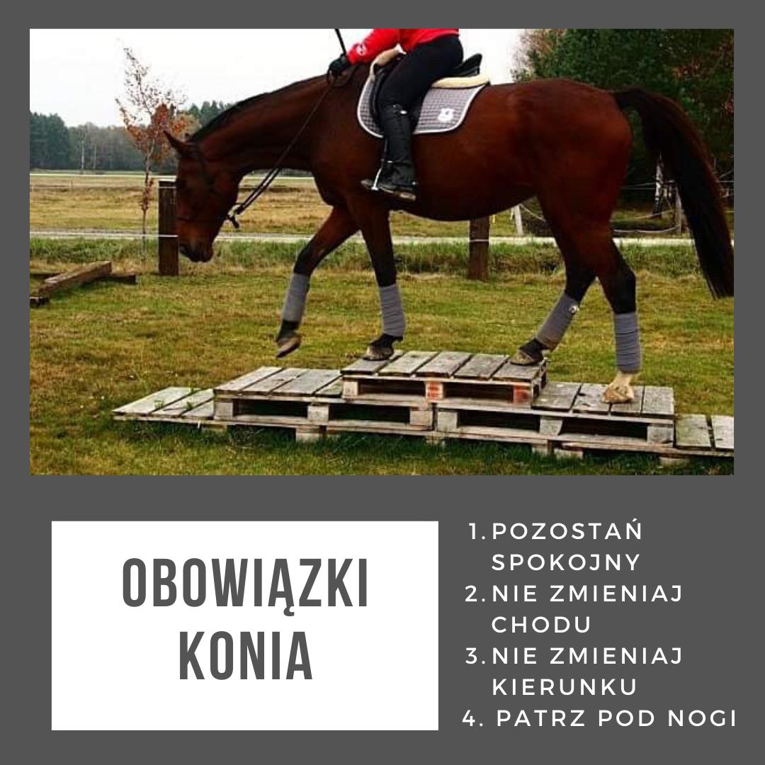 obowiazki_czlowiek_kon_trening_koni