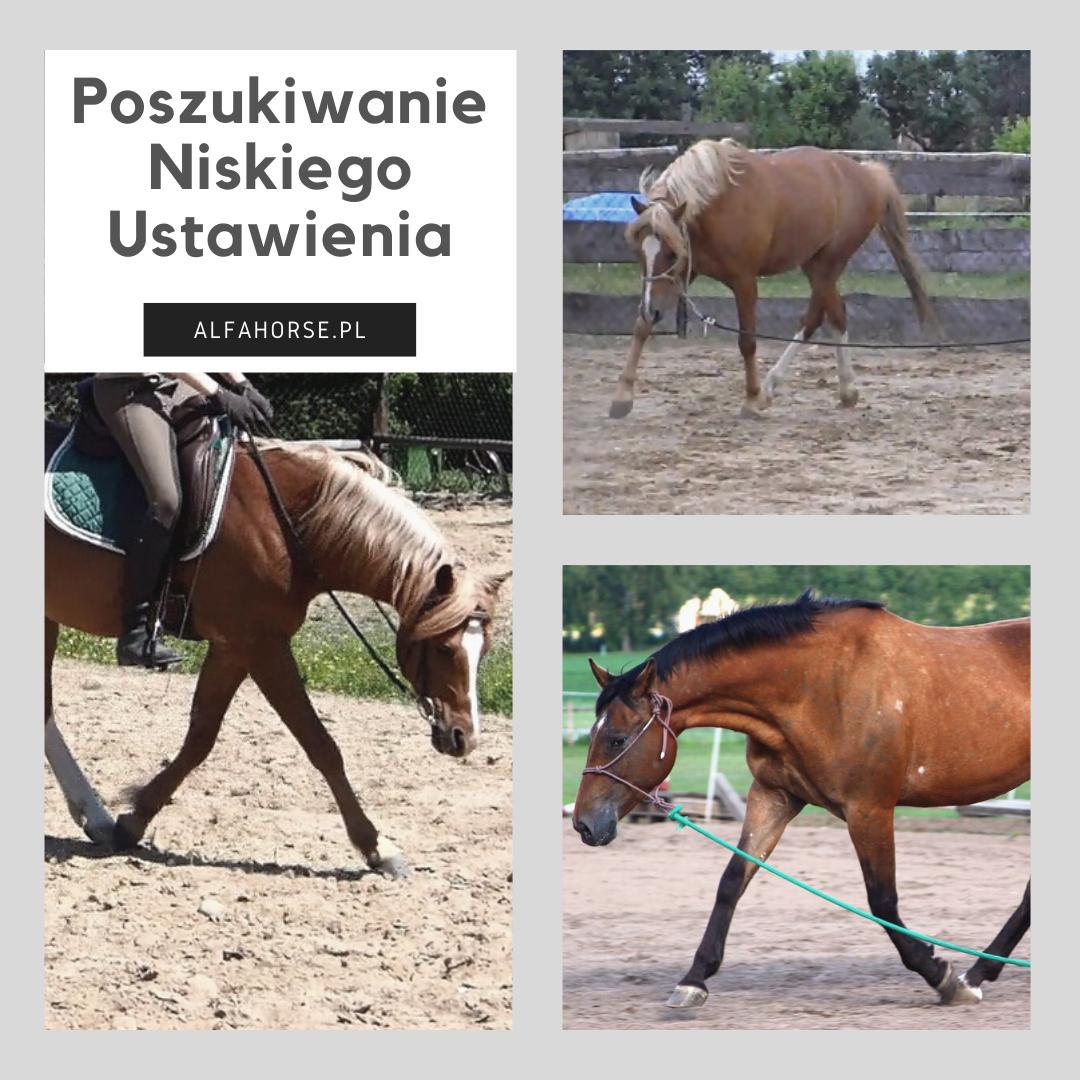 rozluznienie_niskie_ustawienie_trening_koni