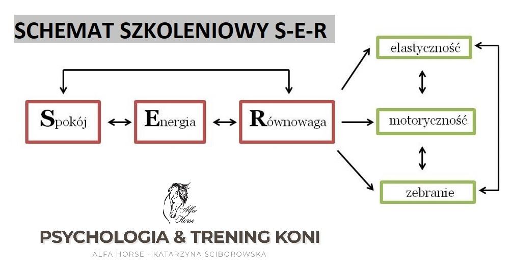 schemat_szkoleniowy_ser
