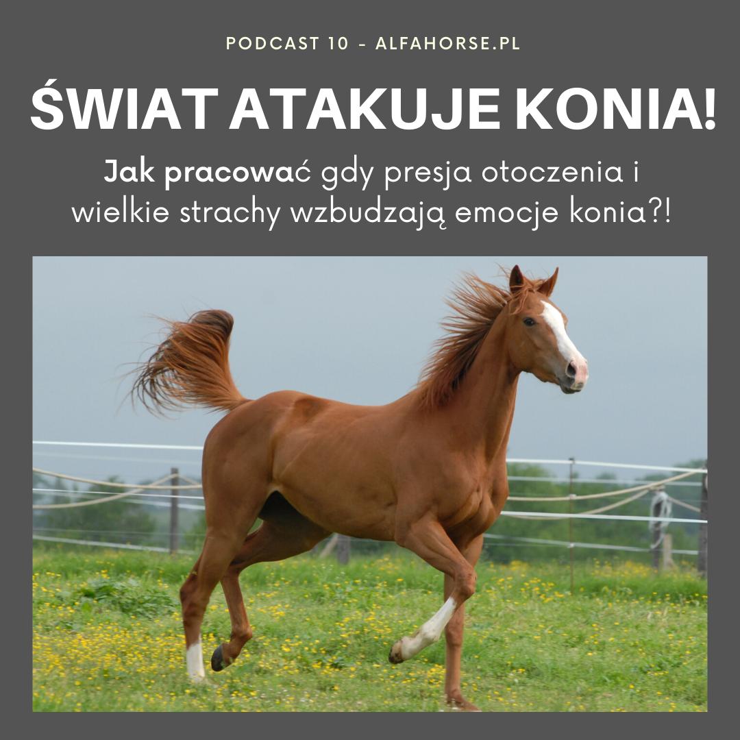 swiat_konie_atakowanie_trening_koni_problemy_strach