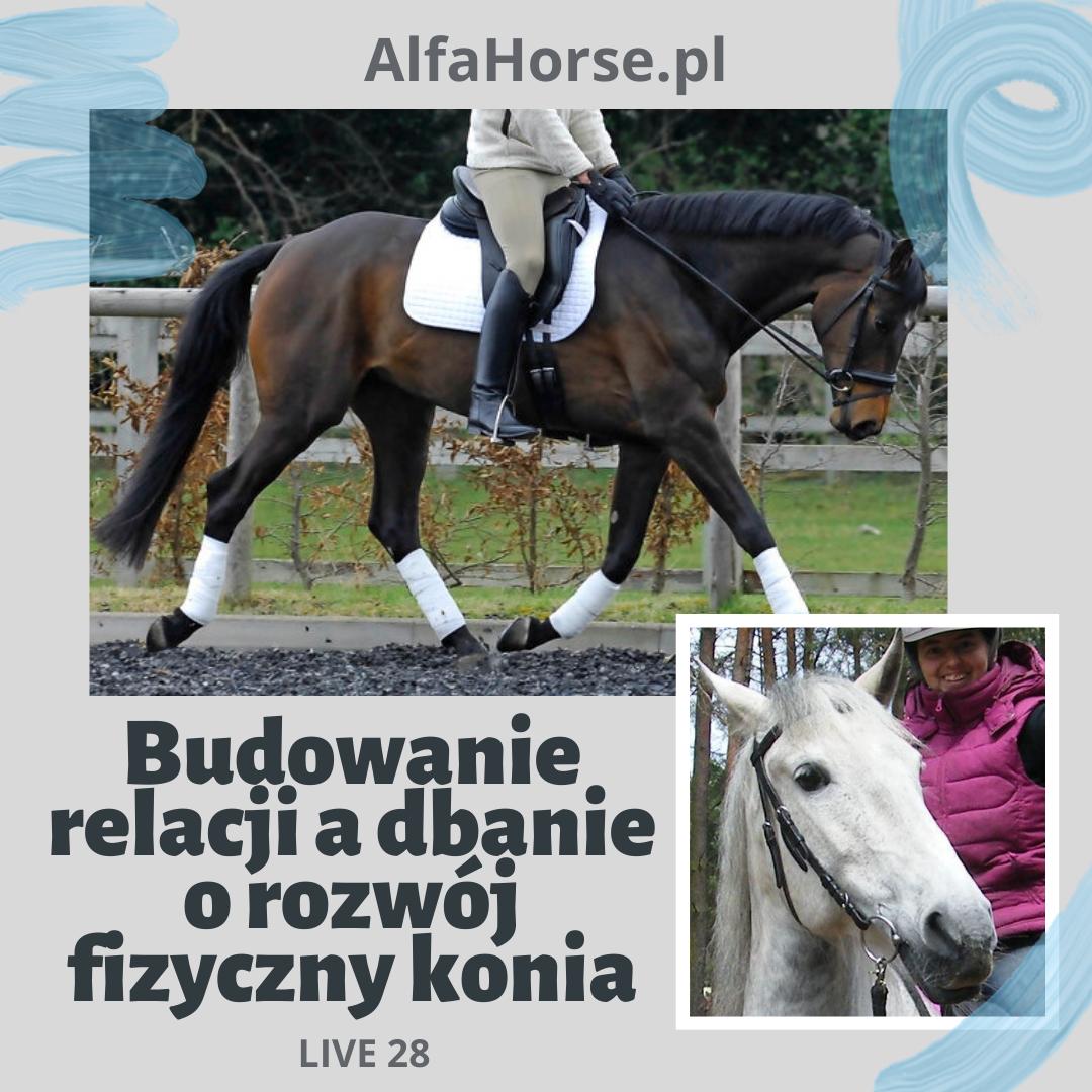 relacja_rozwoj_fizyczny_trening_koni