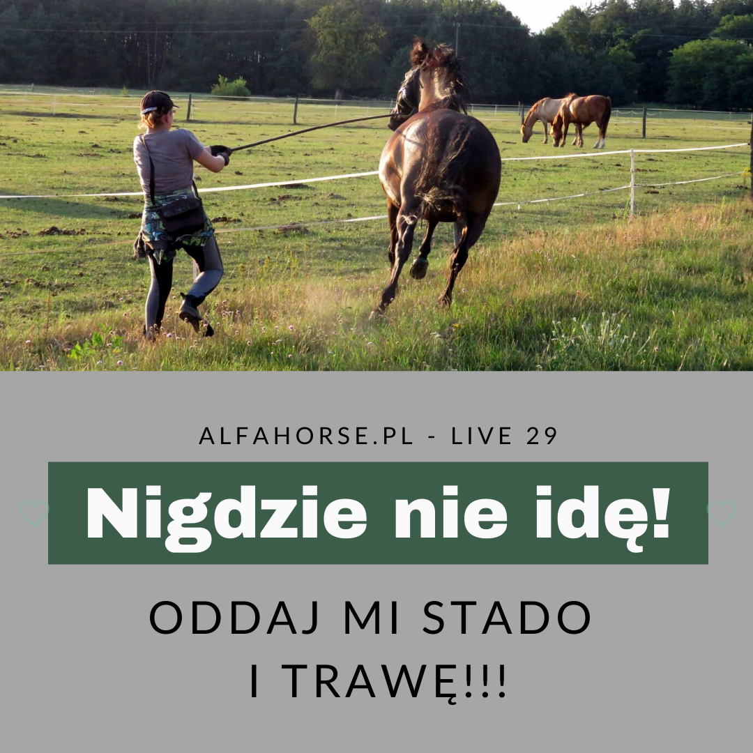 konie_problemy_stado_trawa_nie_idę_