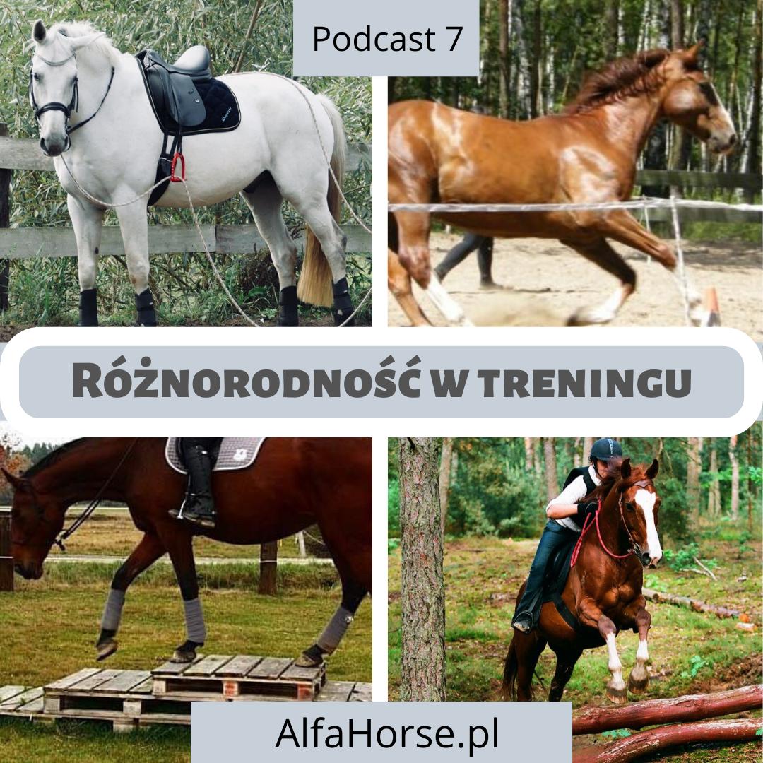wszechstronny_trening_koni_urozmaicenia