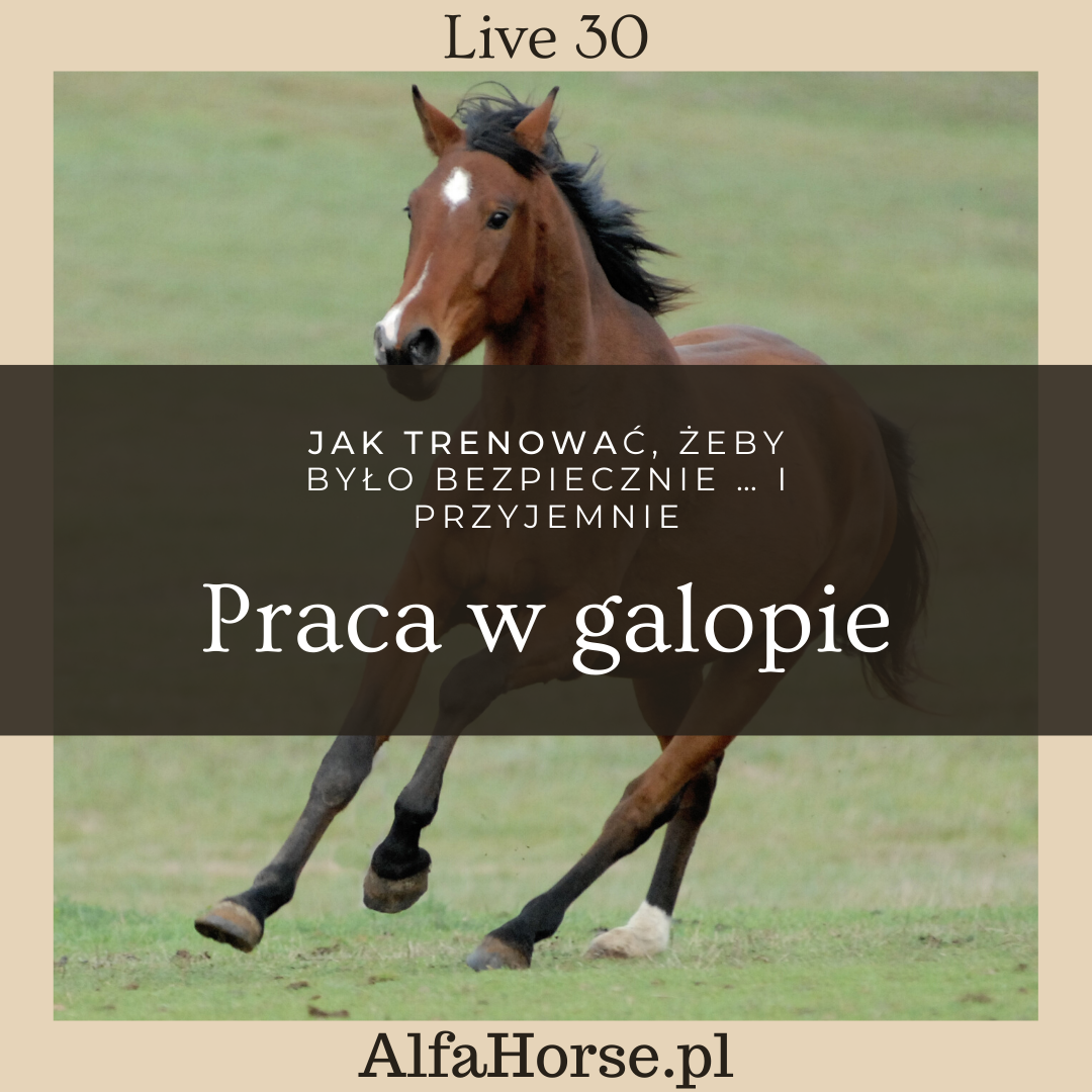 galop_trening_konia_live_alfahorse