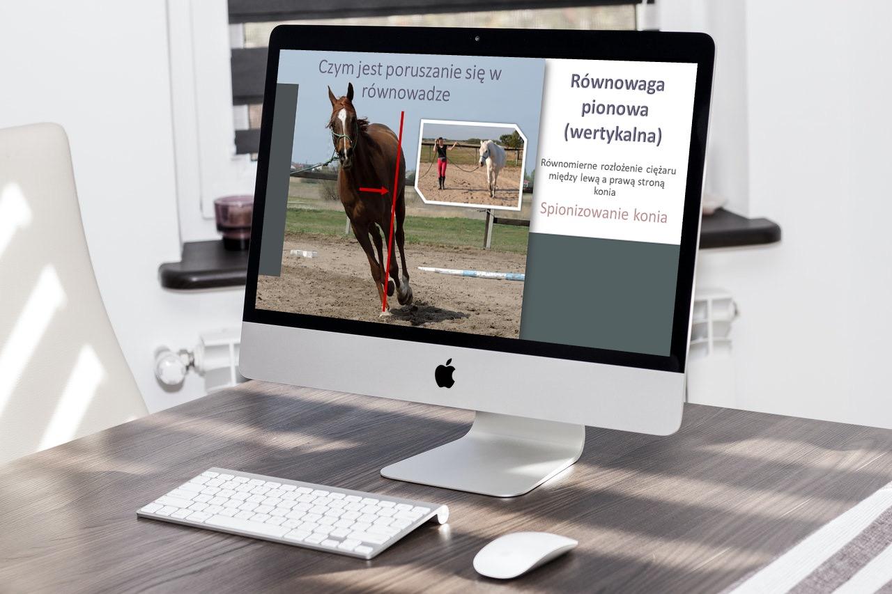 konie_trening_rownowaga_kontakt_elastycznosc_1