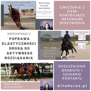 wideowykład_konie_trening_2_kontakt_rozluznienie_wygiecie_elastycznosc