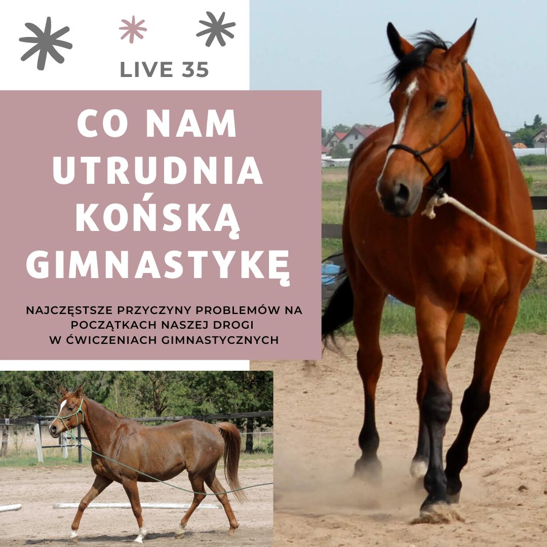 trudne_poczatki_gimnastyka_koni