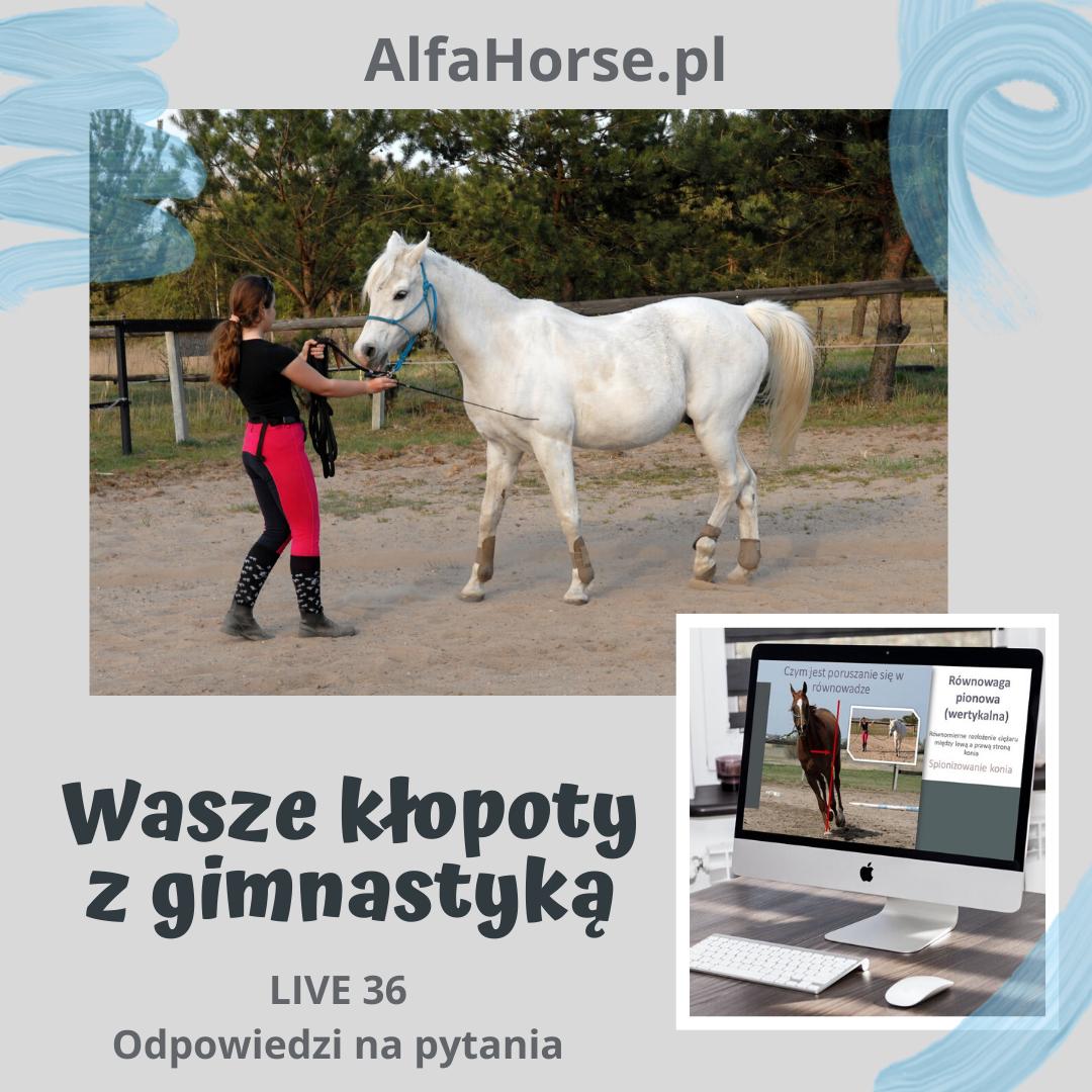trening_koni_gimnastyka_klopoty_wideowyklad