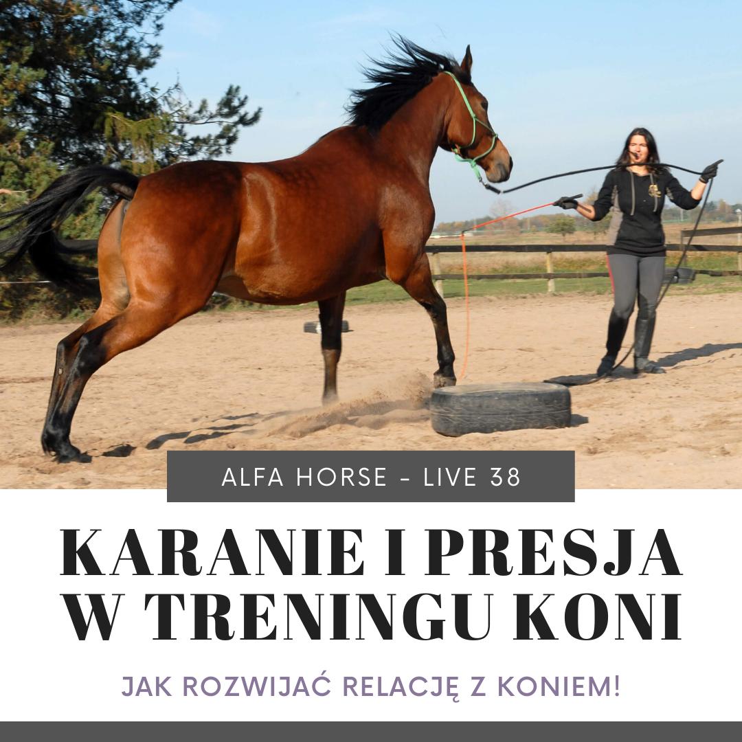 kara_presja_trening_koni_livehttps://www.alfahorse.pl/sklep/