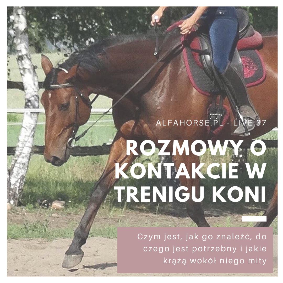 jazda_praca_na_kontakcie_trening_koni