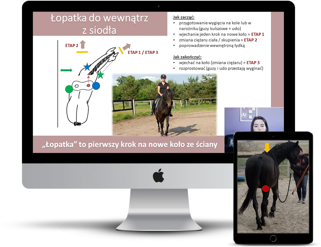 trening_koni_ruchy_chody_boczne_alfahorse_3