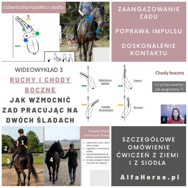 trening_koni_ruchy_chody_boczne_ujezdzenie_dressage_1