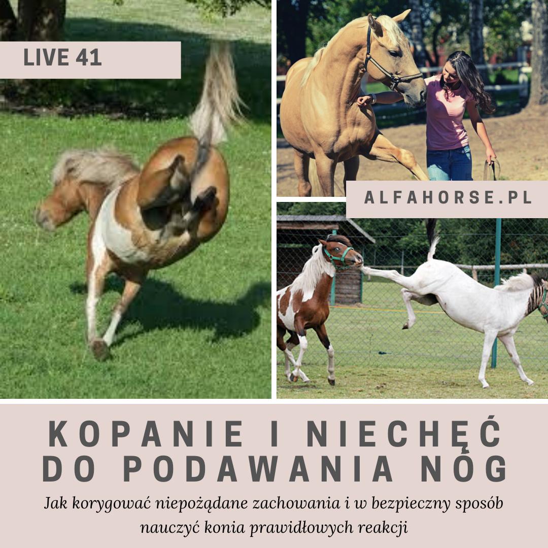 trening_konia_kopanie_nogi_strach_dominacja