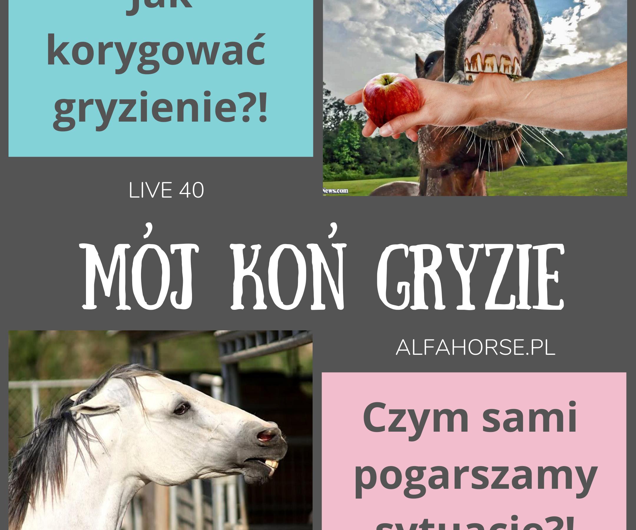 kon_gryzie_trening_problem