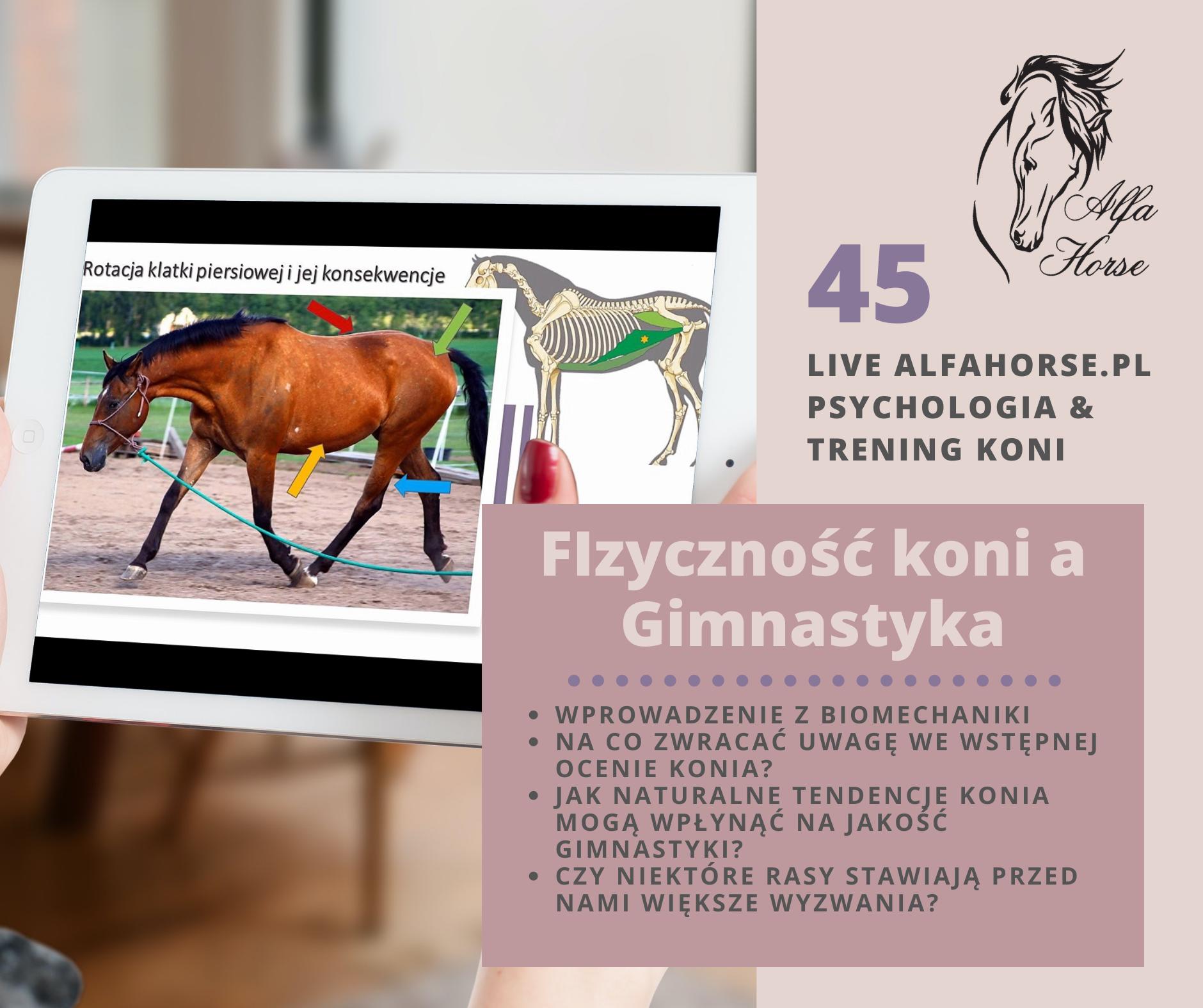 fizycznosc_gimnastyka_konie_trening_alfahorse