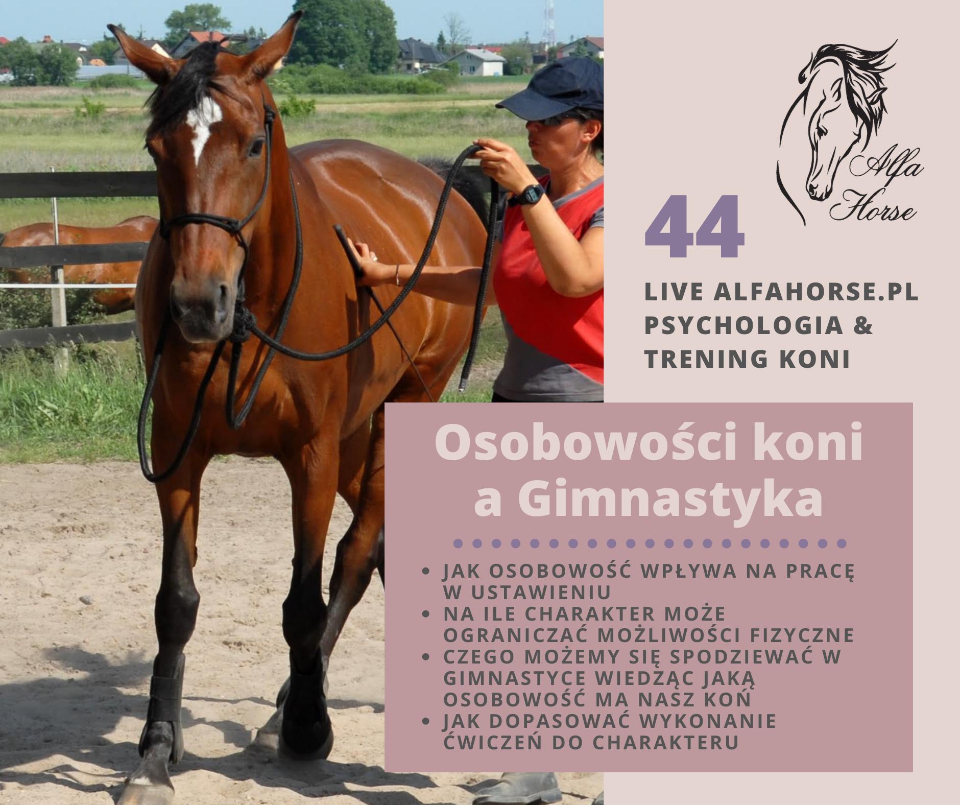 osobowosci_gimnastyka_konie_trening_live_alfa_horse