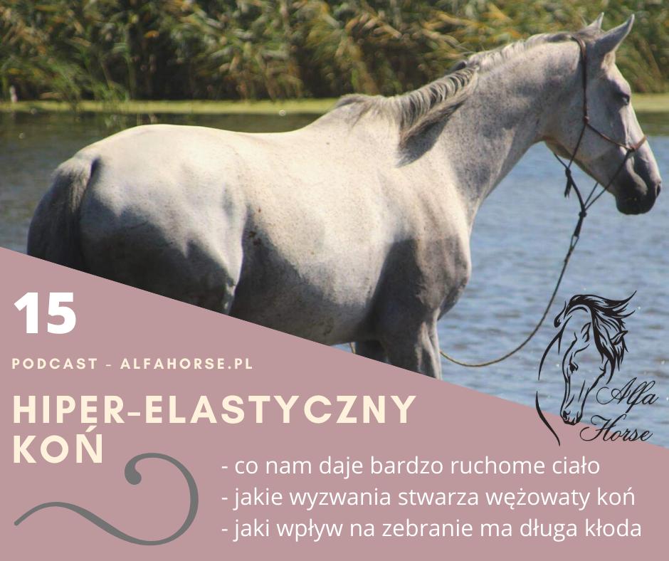 podcast_hiper_elastyczny_kon