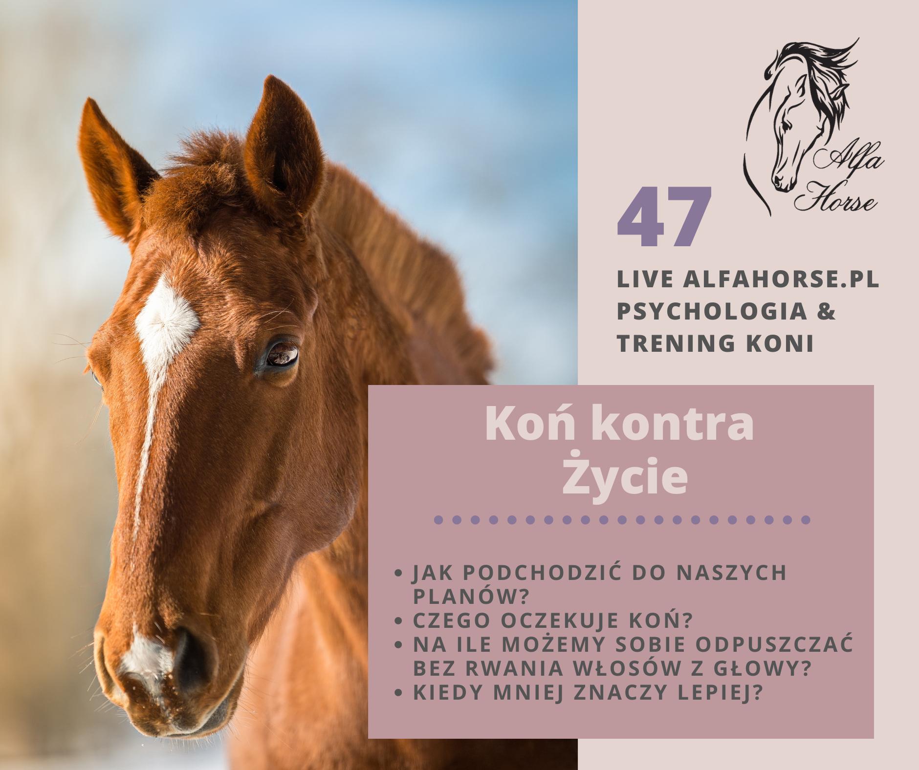 kon_kotra_zycie_trening_problemy_konie