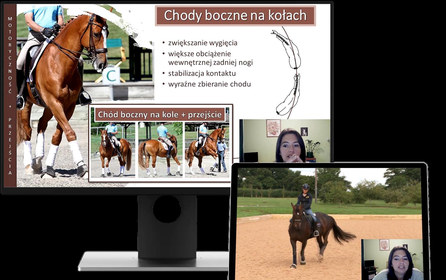 alfahorse_trening_konia_zebranie_wyklad_7
