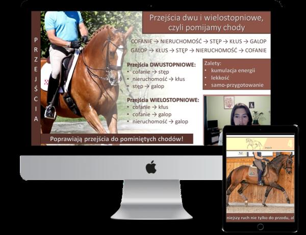 alfahorse_trening_konia_zebranie_wyklad_8