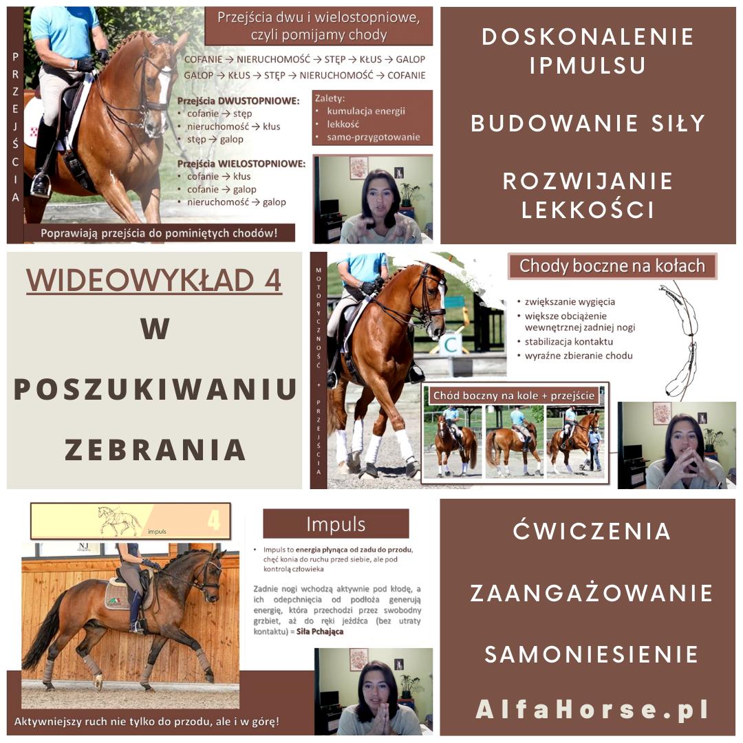 zebranie_tremimg_koni_impuls_wyklad_wideowyklad_alfahorse