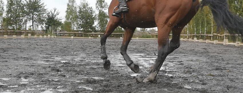 bloto_podloze_kon_horse