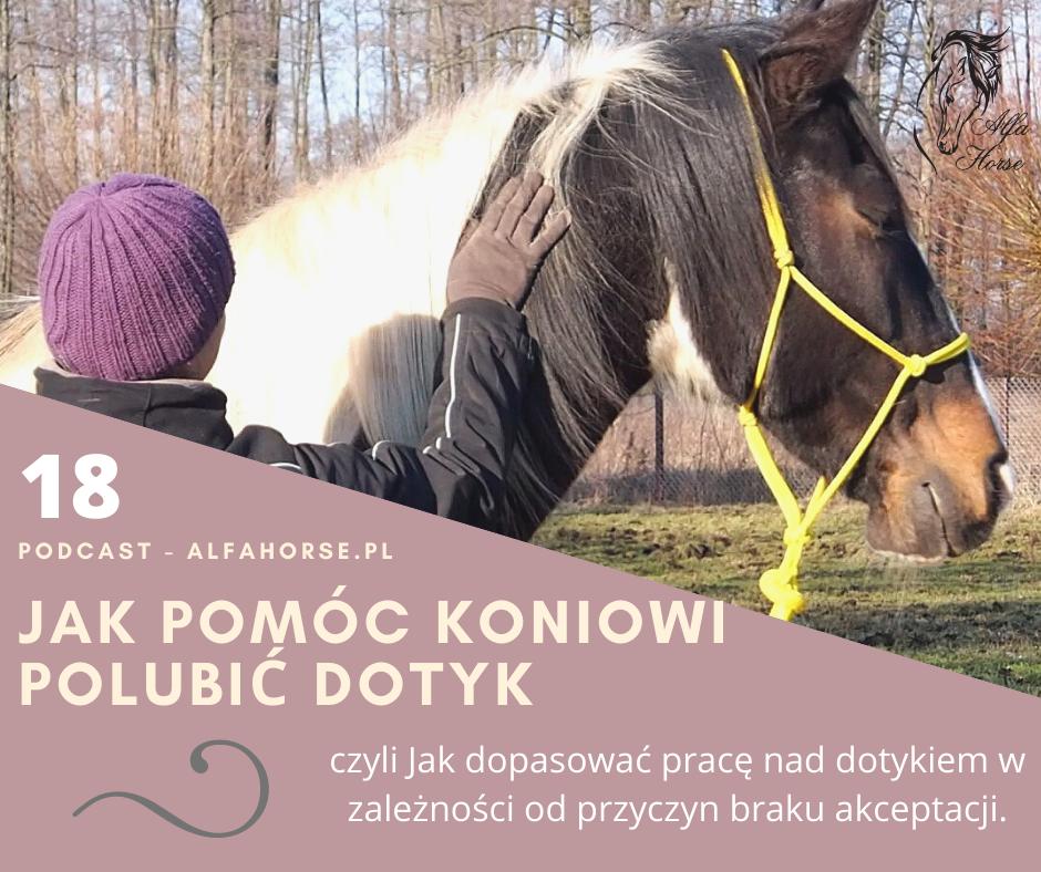 podcast_pomoc_koniowi_polubic_dotyk_trening_koni_glaskanie