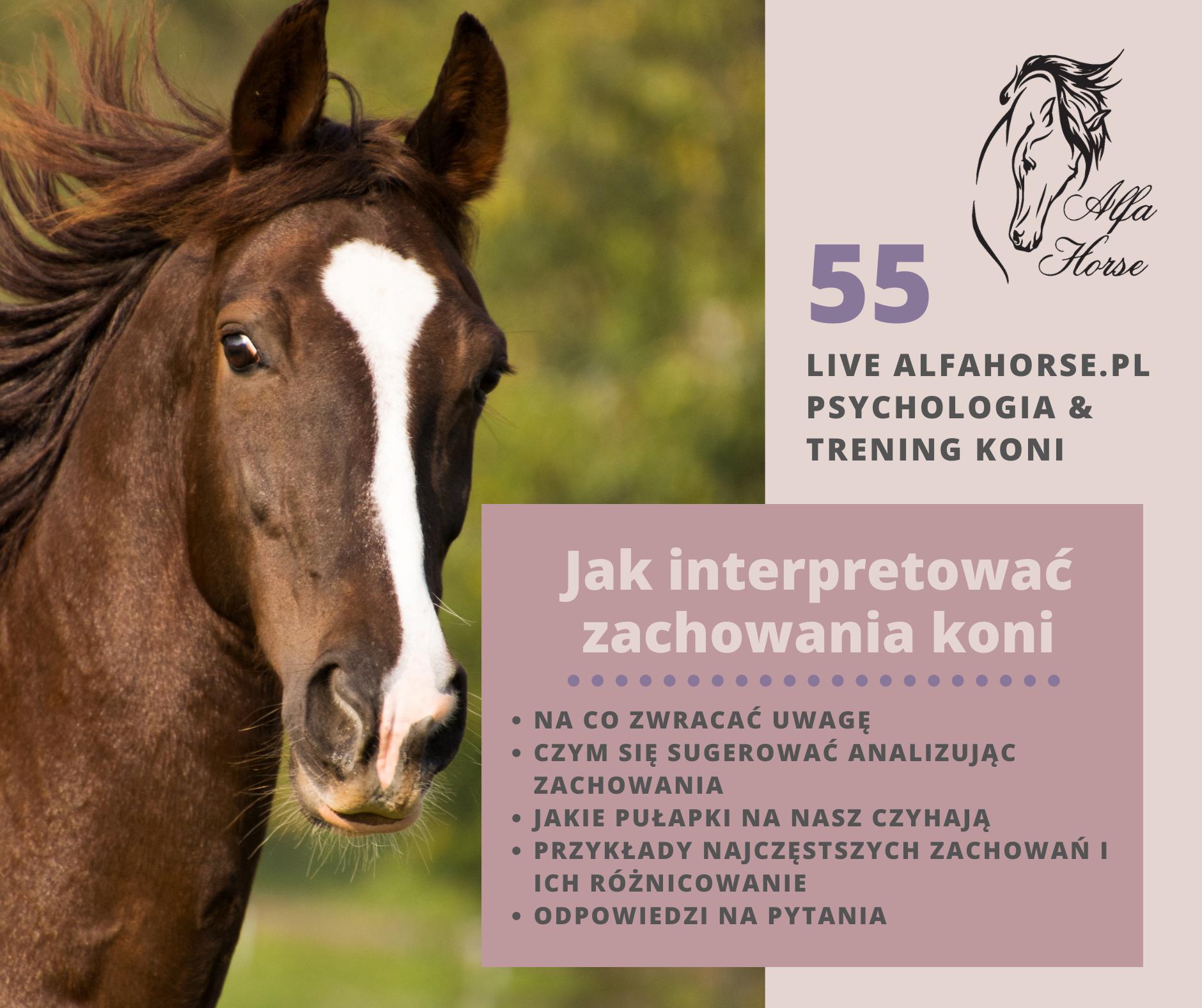 jak_interpretowac_zachowania_koni