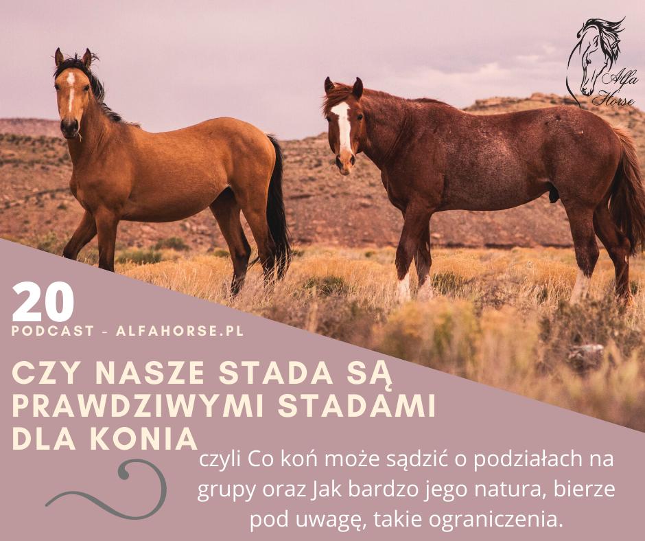 podcast_20_czy_nasze_stada_sa_prawdziwymi_stadami_dla_koni