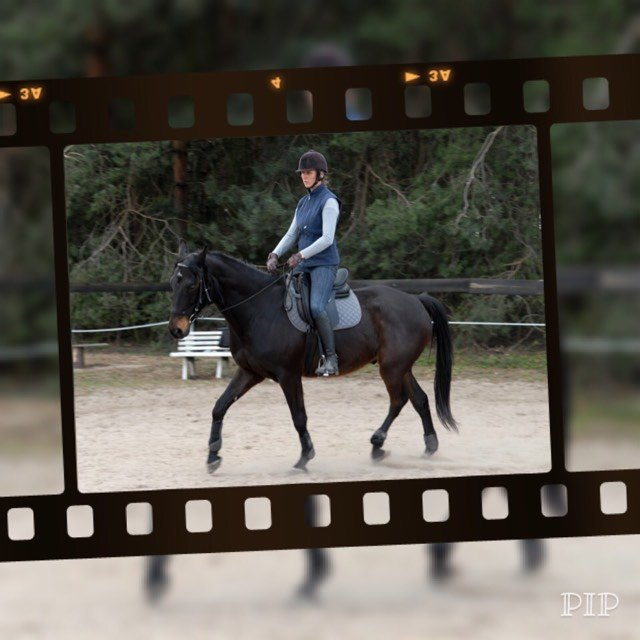 konsultacje_online_jazda_trening_konie