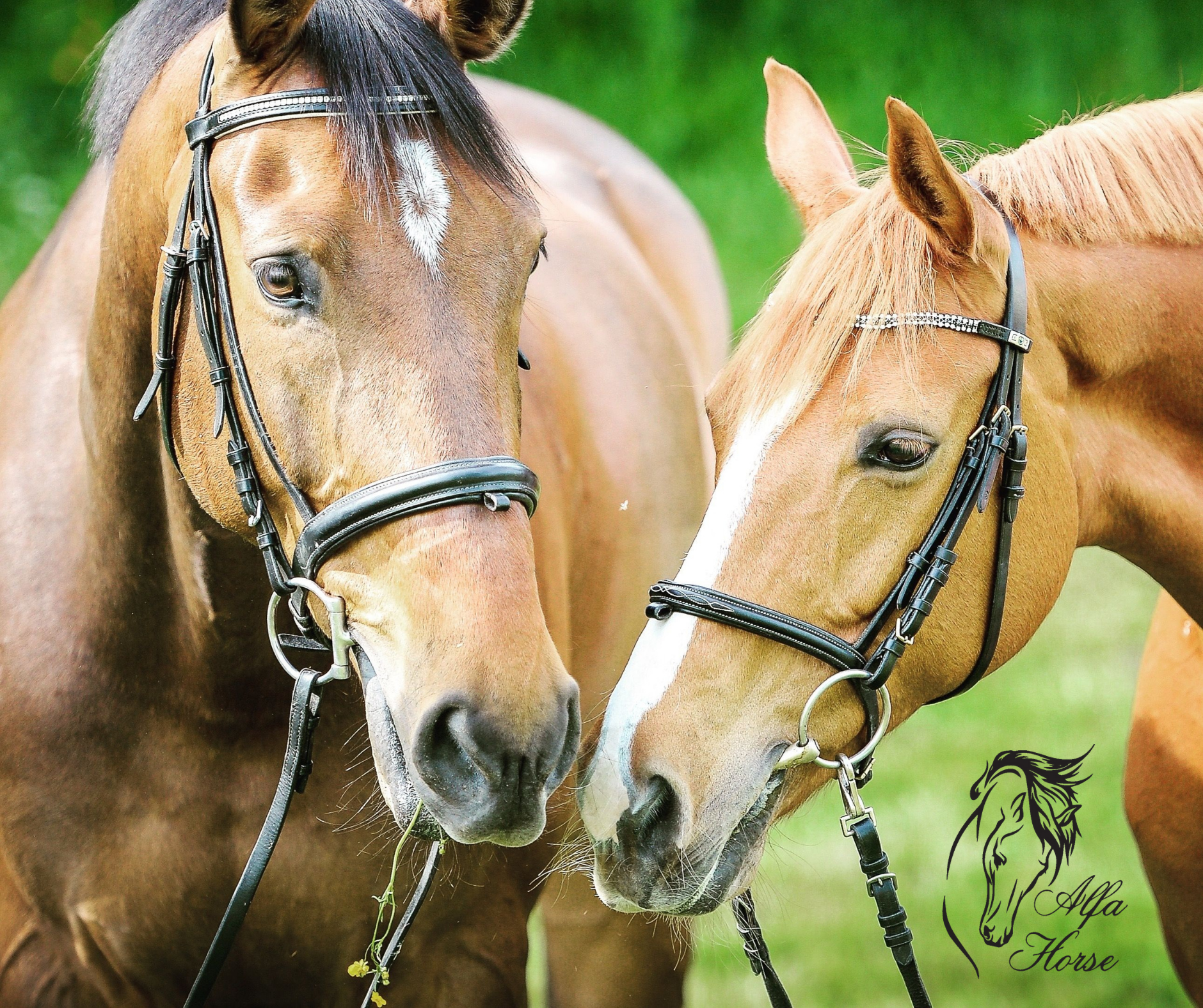 jak_zapanowac_nad_jedzeniem_trawy_przez_konia